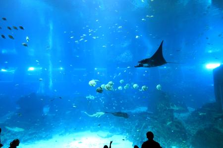aquarium visit: Stingray Stock Photo