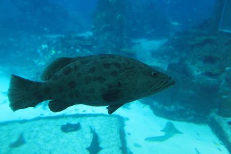 aquarium visit: Groupa