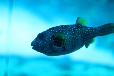 underwater world: Underwater World
