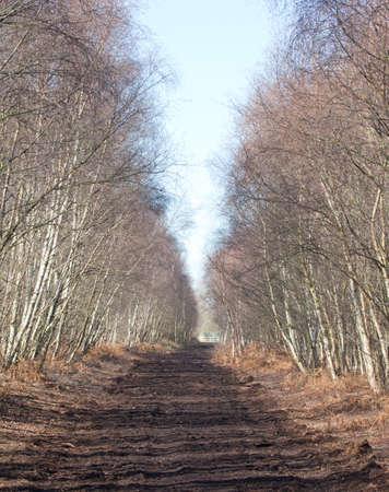 turba: Woodland turba pista a trav�s de los �rboles Foto de archivo