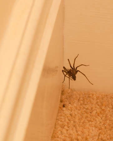skirting: Photo of a spider on a web near skirting boards