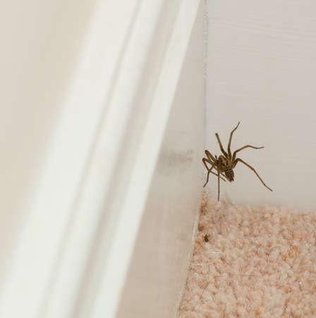 skirting: Spider on a web near skirting boards