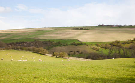 Landscape in the Yorkshire Wolds photo