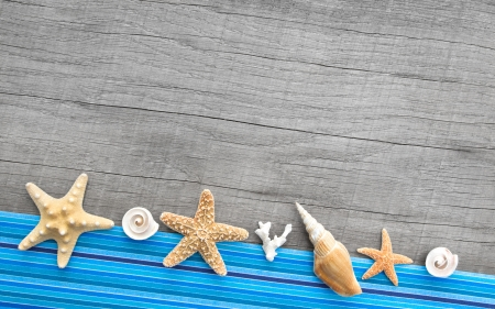 Seashells and starfishes on wooden background with a blue striped frame photo