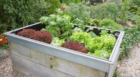 paysagiste: Jardin des plantes de plus en plus dans la boîte en bois dans le jardin.