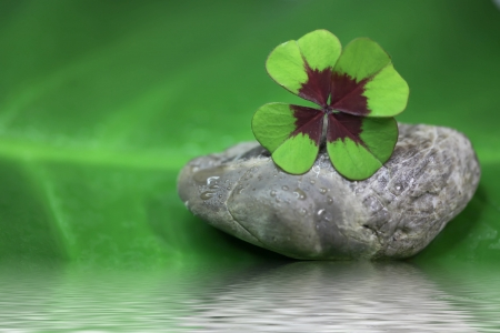 lucky charm: Symbol for luck - four leaves clover - for concepts Stock Photo