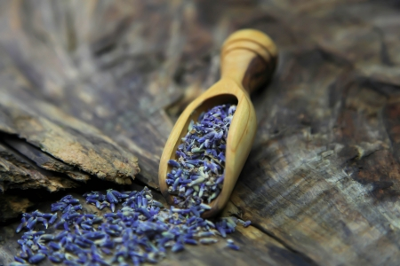 Dried Lavender with blue flowers  photo