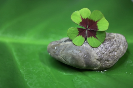 charms: Symbol for luck - four leaves clover - for concepts Stock Photo