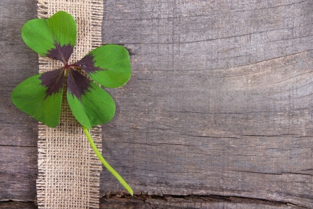 Wooden background with four leaves clovers photo