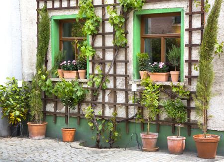 trellis: Flowers in terracotta pots  Stock Photo