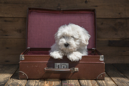 humorously: Animal wooden Traveling concept -little baby dog is going on holidays