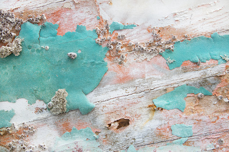 calcification: Old wooden shabby chic background with aged calcification of mussels and fossils in turquoise pastel colors.