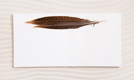 Pair of feathers on a white beige empty background or frame. Idea for a greeting or condolence card. photo