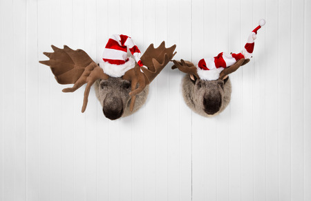 humorously: Couple of elk hanging on a wall for christmas decoration. Stock Photo