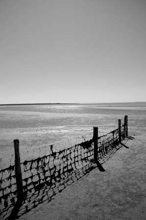 wadden: Fence with seaweed at the wadden sea, Denmark Stock Photo