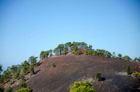 treetops: Green treetops against a blue sky, on a volcanic hillside in Tenerife, Spain Stock Photo
