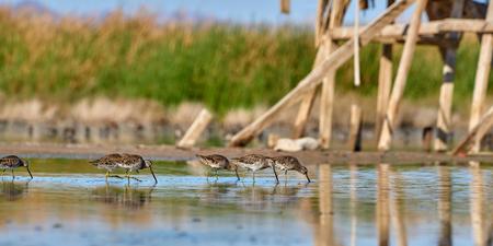 Birds on pond feeding near Salton Sea Stock Photo
