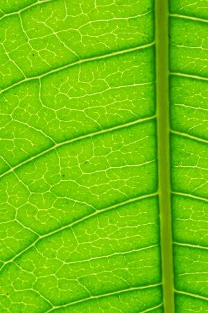 stoma: Green Leaf Macro Pattern Stock Photo