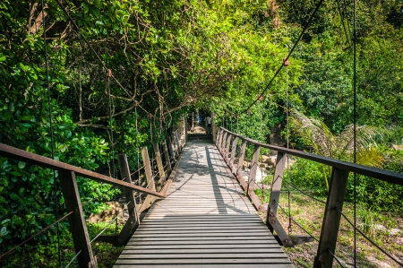 Hanging Bridge in a forest photo