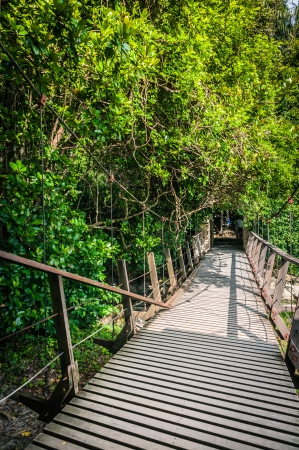 Hanging Bridge in a forest 스톡 콘텐츠