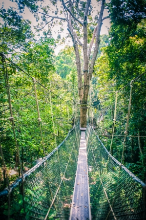 Canopy Walk Through the Rainforest photo