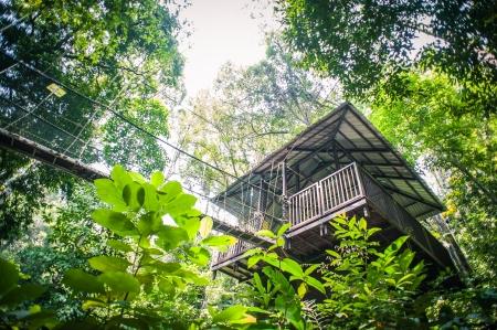熱帯雨林を通して天蓋徒歩
