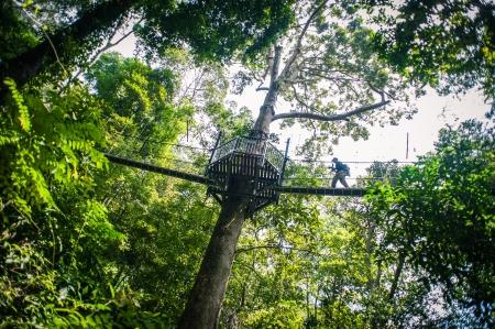 熱帯雨林を天蓋徒歩 写真素材