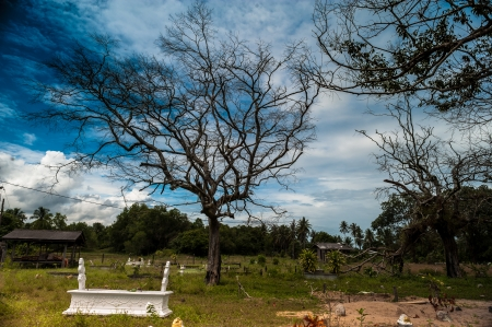 A Tombstone Under A Dying Tree