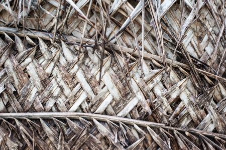crosshatch: Natural CrossHatch Pattern made out of dried palm leaves