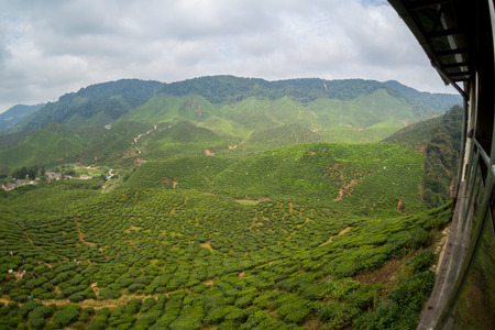 Tea Plantations Cameron Highlands photo