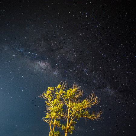 A Milky way, a tree, in a rainforest Stock Photo