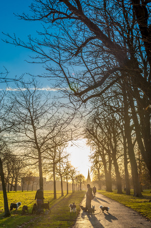 SIlhouette of dog walkers at a park at sunset photo