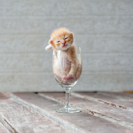lop eared: Cute Kitten in Wine Glass with textured background