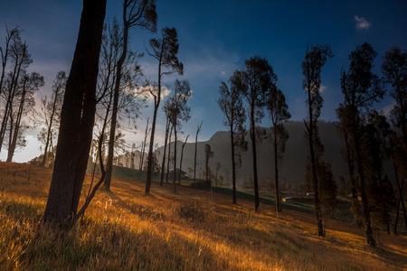 tengger: Autumn in Bromo Tengger Semeru National Park.