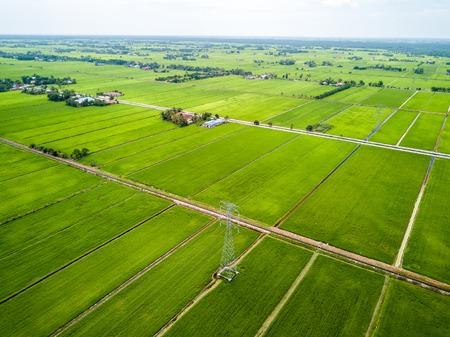 空撮 - 緑の田んぼ 写真素材
