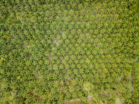 Aerial View - Palm Oil Plantation.
