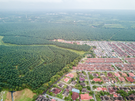 Aerial Photo - Palm Oil Plantation and rooftop of houses. A small town of Jasin, Malacca some 100km away from Kuala Lumpur, Malaysia Zdjęcie Seryjne