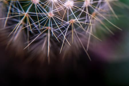 Close Up - Cactus. Shallow depth of field, Soft focus, selectic focusing, light leak, creative shot,