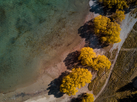 Aerial View - Autumn Trees by a lake. Infrared feel
