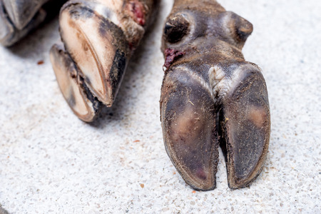 Cows Hooves on a white background, shallow depth of field