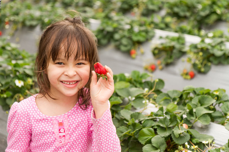Asian girl happily picking strawberries at strawberry patch