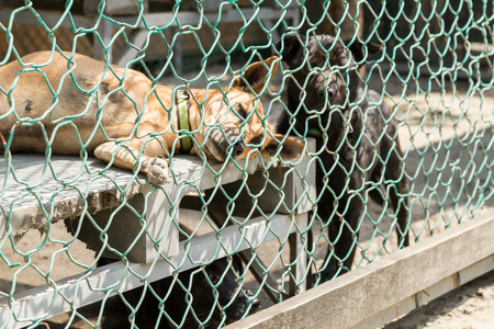 Dogs waiting to be adopted, in fenced off area photo