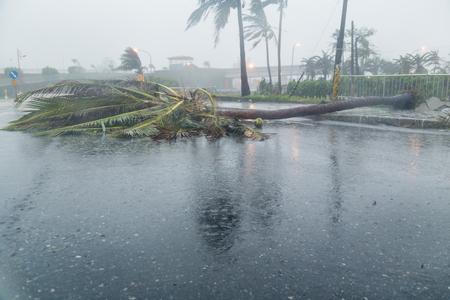 Ontwortelde boom blokkerende weg tijdens een tyfoon Stockfoto