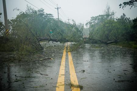台風の間に根こそぎ木ブロック道路