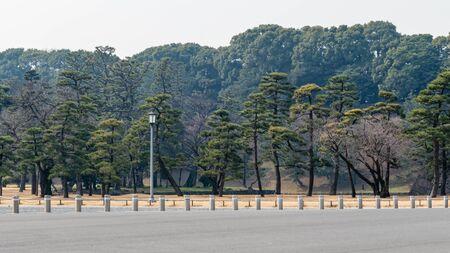 Trees in Kōkyo Higashi Gyoen, Imperial Palace Gardens in winter Stock Photo