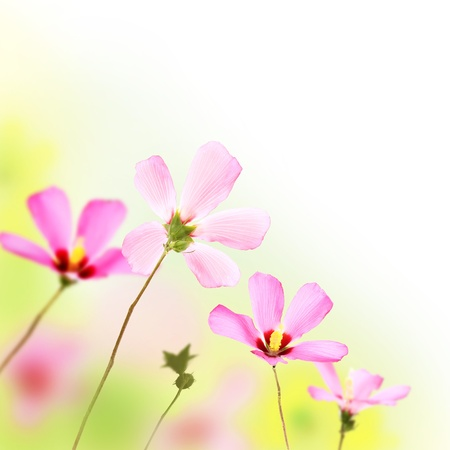 Bunch of pinkish flowers with blurred background Stock Photo - 16247187