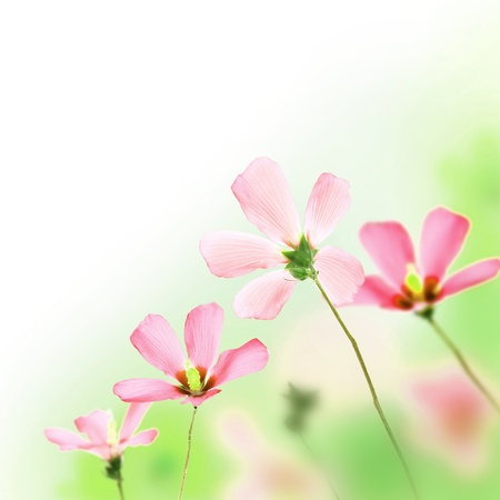 pinkish: Bunch of pinkish flowers with blurred background Stock Photo