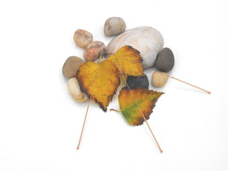 acupuncture needles concept of autumn, water and earth photo