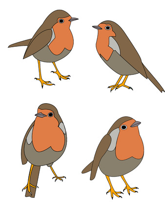 vectors illustrations of a robin bird in various poses Illustration