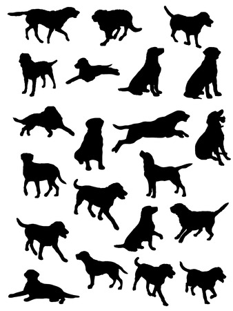 black labrador: vector silouettes of labrador dog in various poses